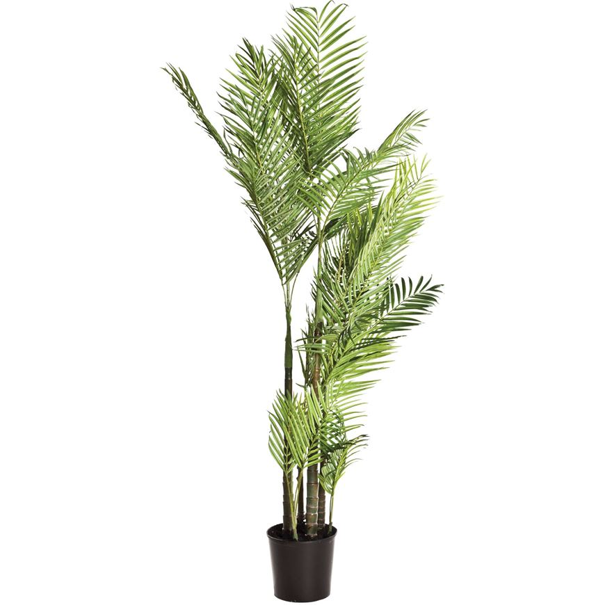 Picture of ARECA PALM tree h170cm green