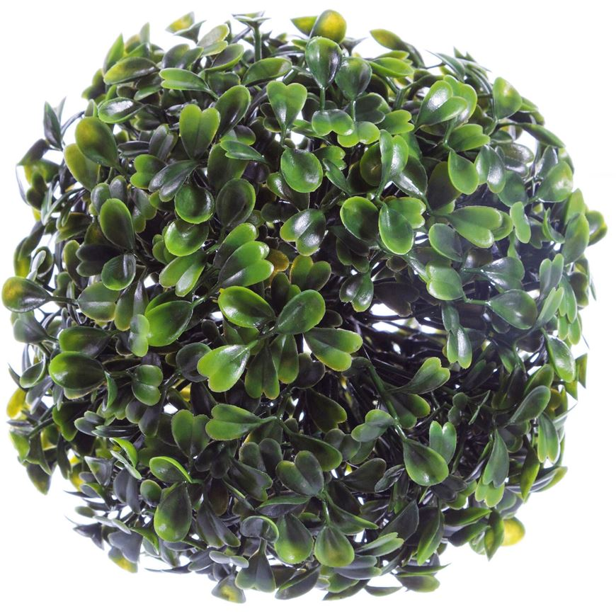 Picture of BUXBOM plant d12cm green