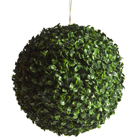 Picture of BUXBOM plant d15cm green