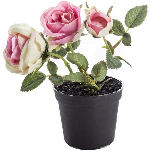 Picture of ROSE pot assorted 12