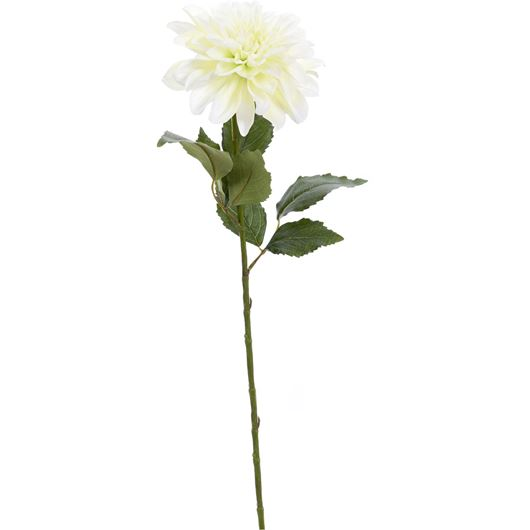 Picture of DAHLIA stem h69cm cream/green