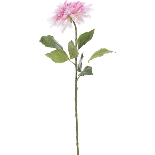 Picture of DAHLIA stem h69cm pink
