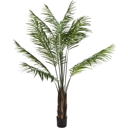 Picture of ARECA tree h210cm green