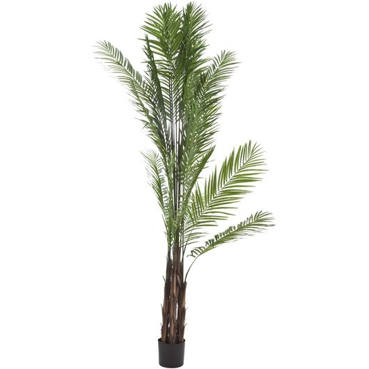 Picture of ARECA PALM tree h240cm green