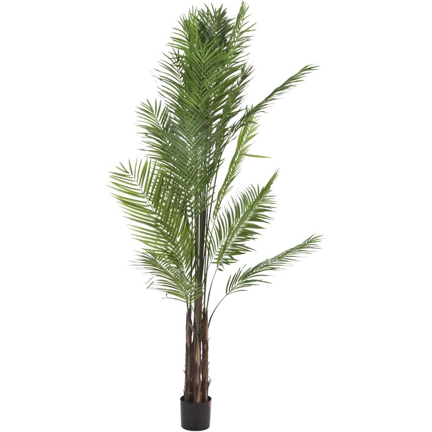 Picture of ARECA PALM tree h270cm green