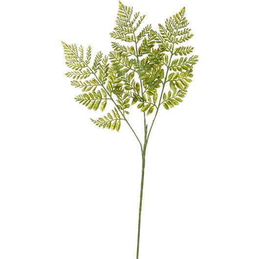 Picture of RUFFLE fern h70cm green