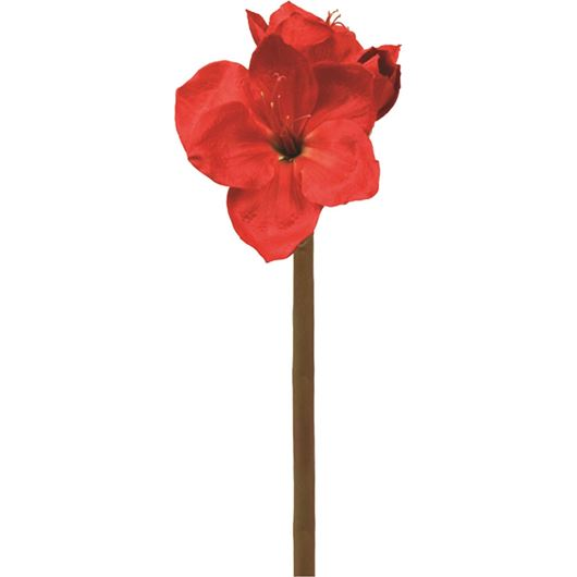Picture of AMARYLLIS stem h75cm red