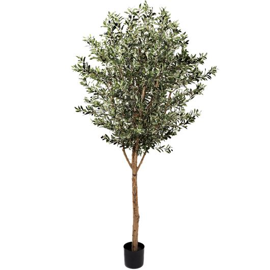 Picture of OLIVE tree h230cm green