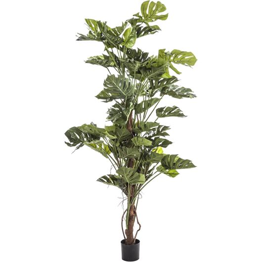 Picture of PHILO on pole plant h150cm green