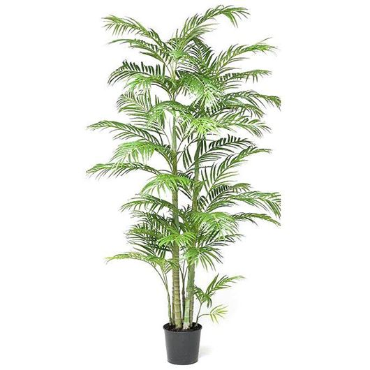 ARECA_PALM_tree_h200cm_green
