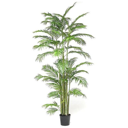 ARECA_PALM_tree_h260cm_green