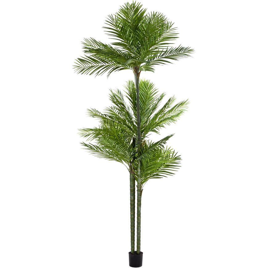 areca palm tree h450m green the one the one where price and