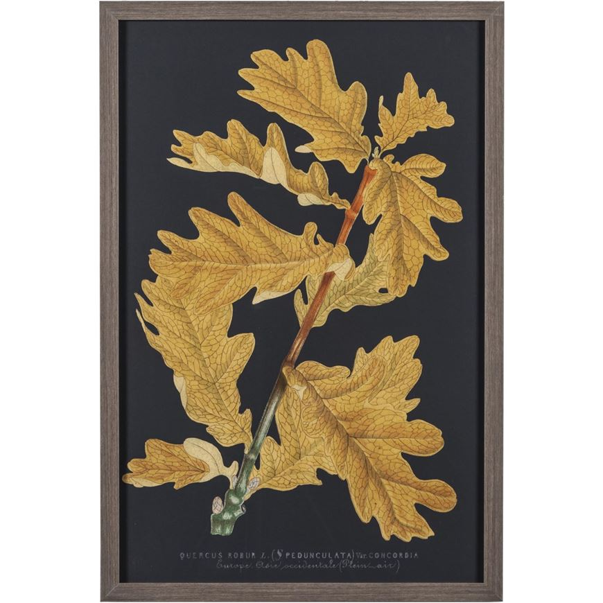 Picture of Framed Print Trees and Leaves IV 43x64 grey