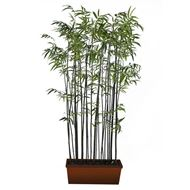 Picture of BAMBOO plant h260cm green