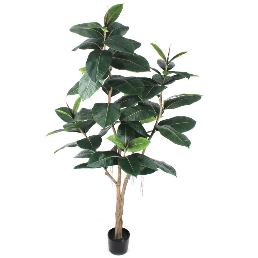 Picture of RUBBER plant h180cm green