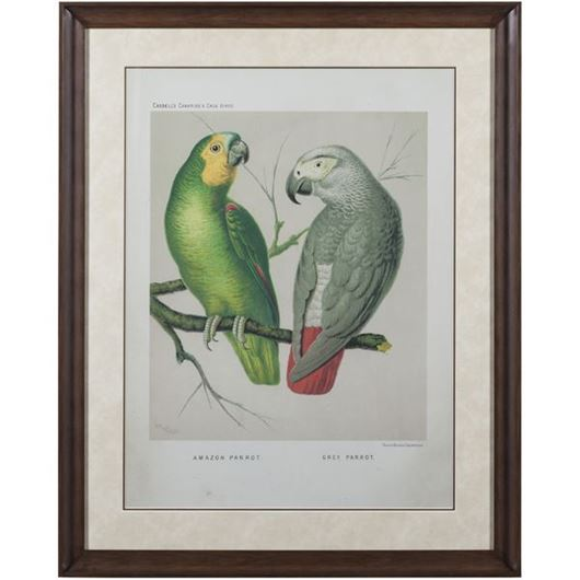 Picture of Framed Print Two Parrots I 83x103 brown