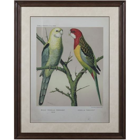 Picture of Framed Print Two Parrots II 83x103 brown
