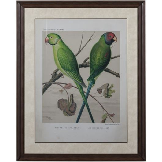 Picture of Framed Print Two Parrots III 83x103 brown