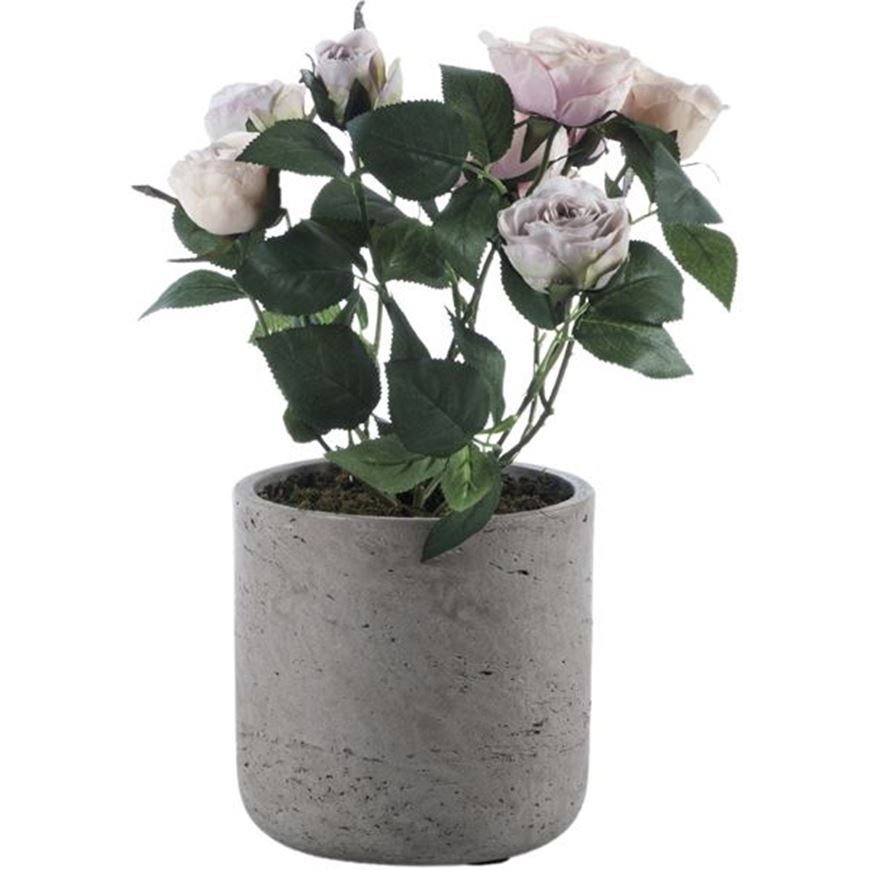 Picture of ROSE pot pink/brown