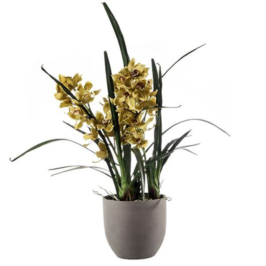 Picture of CYMBIDIUM pot h95cm green/brown