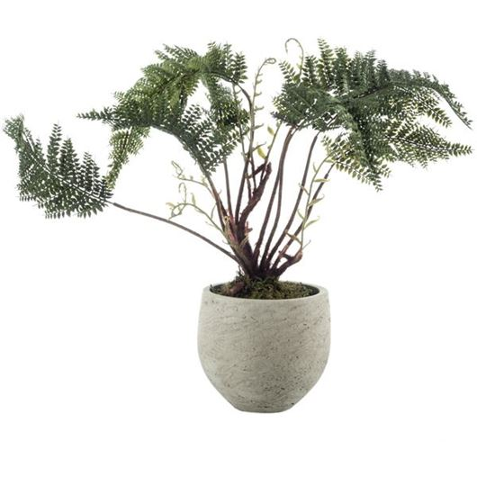 Picture of FERN plant h52cm green