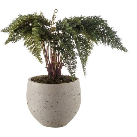 Picture of FERN plant h60cm green