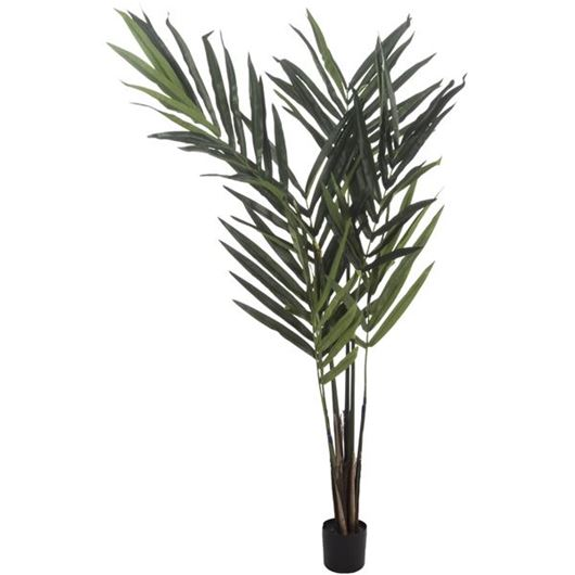 Picture of KENTIA palm tree h150cm green