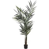 KENTIA palm tree h210cm green