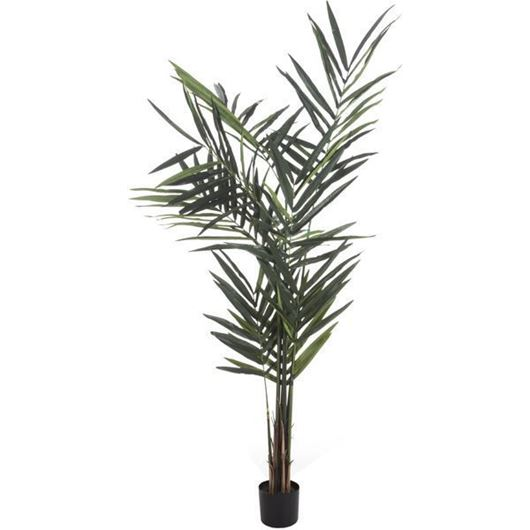 Picture of KENTIA palm tree h210cm green