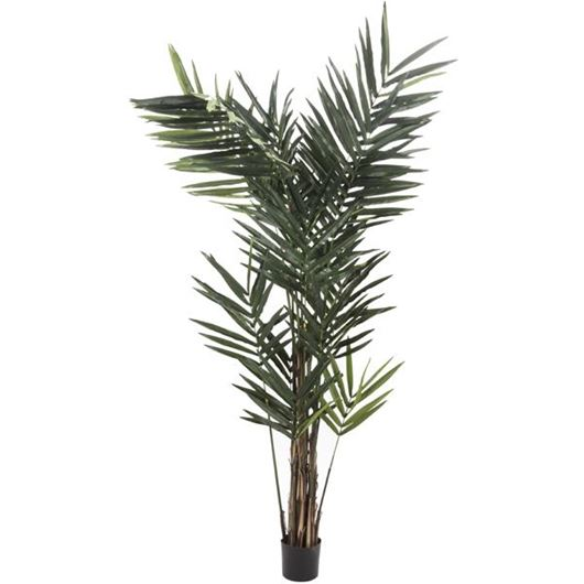 Picture of KENTIA palm tree h270cm green