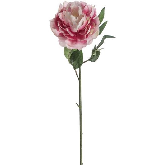 Picture of PEONY stem h70cm pink