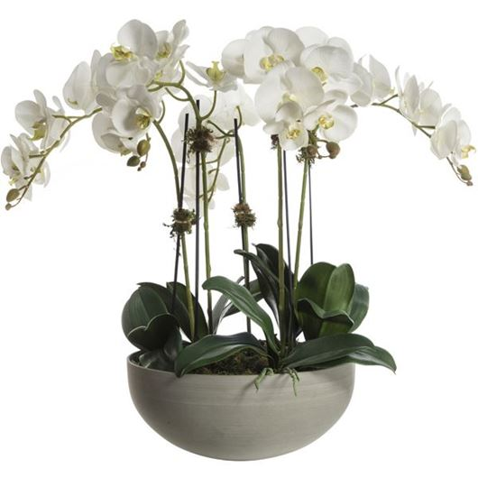 Picture of PHALAENOPSIS pot h73cm white/grey