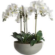 PHALAENOPSIS pot h75cm white/grey