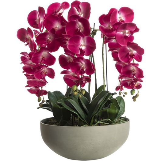 Picture of PHALAENOPSIS pot h75cm purple/grey
