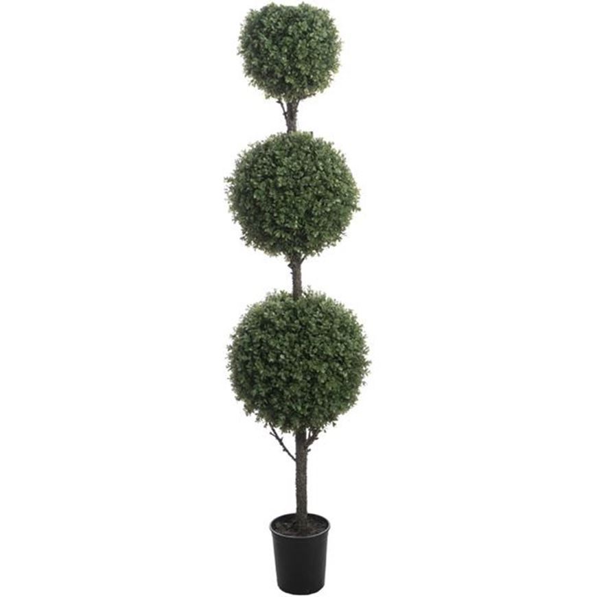 Picture of BOXWOOD tree h180cm green