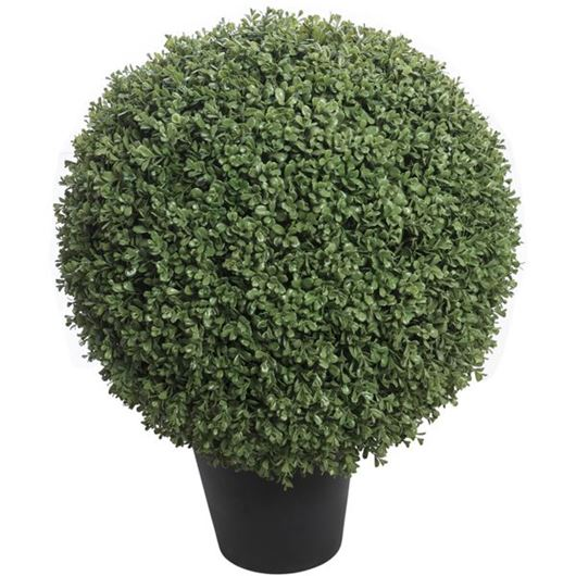 Picture of BOXWOOD plant h84cm green