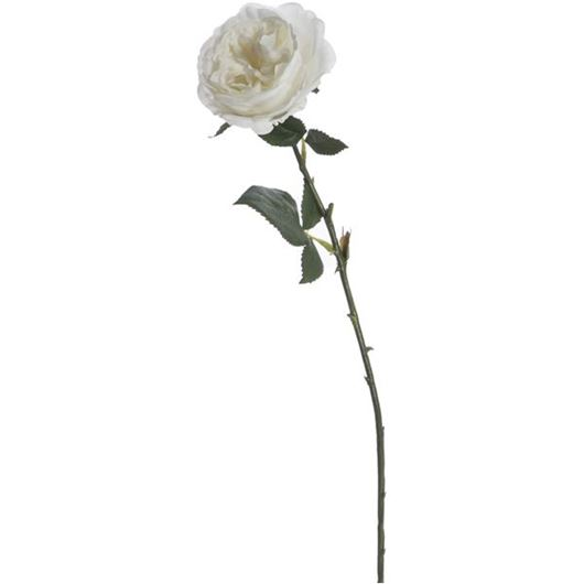 Picture of ENGLISH rose stem h51cm white