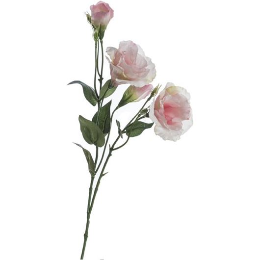 Picture of LIANTHUS stem h68cm pink