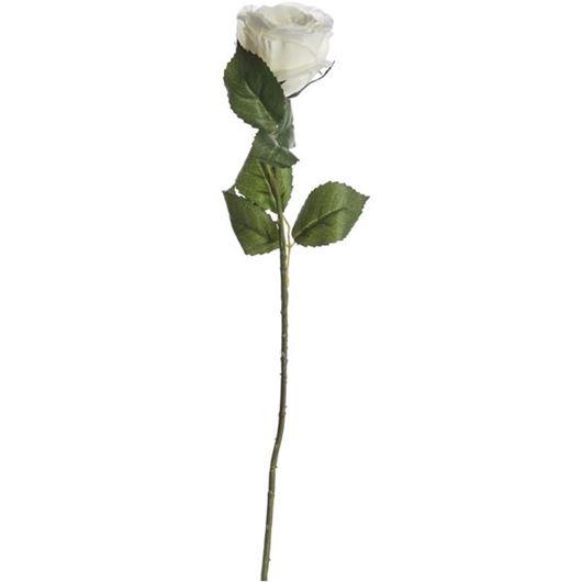 Picture of ROSE stem h56cm white/cream