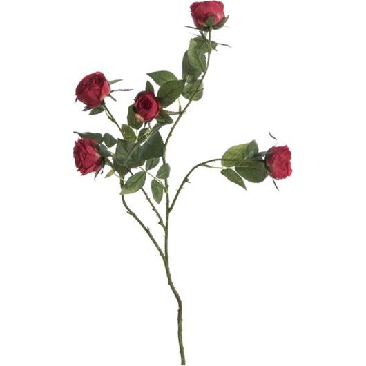 Picture of GARDEN rose stem h68cm red