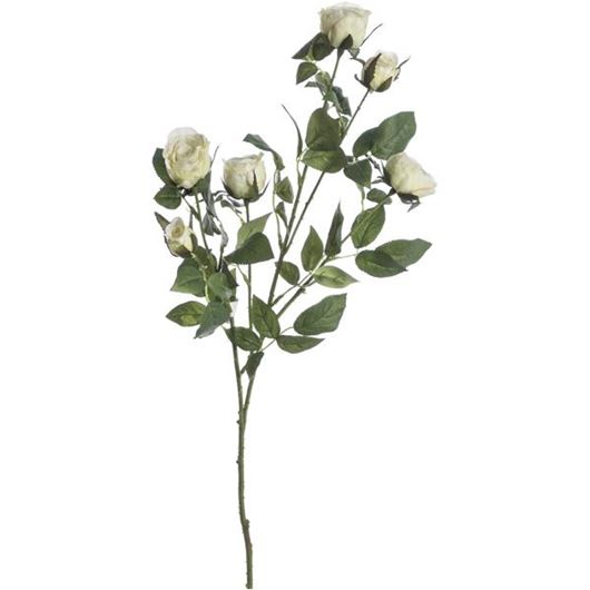 Picture of GARDEN rose stem h68cm green