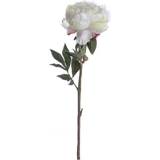 Picture of PEONY stem h46cm white/cream