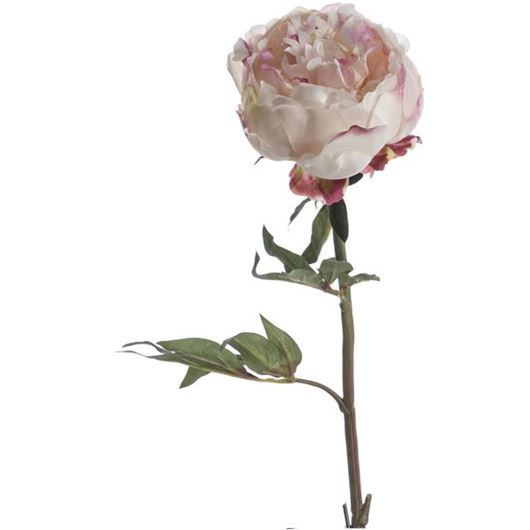 Picture of PEONY stem h46cm pink
