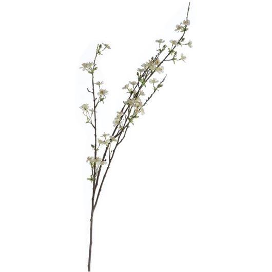 Picture of ANISODENTIA stem h117cm white