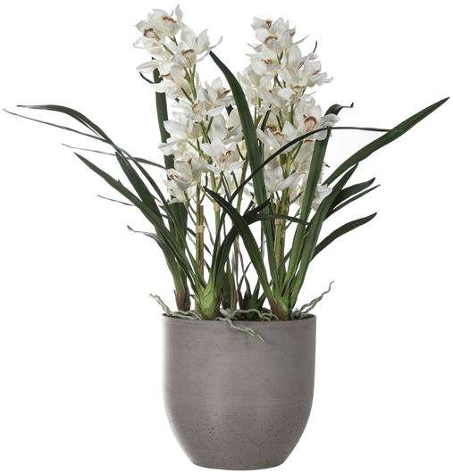 Picture of CYMBIDIUM pot h110cm green/brown