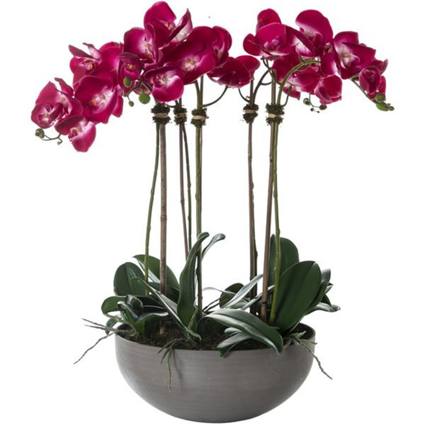 Picture of PHALAENOPSIS pot h73cm purple/grey