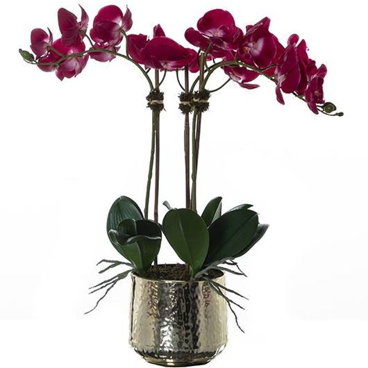 Picture of PHALAENOPSIS pot h72cm purple/gold