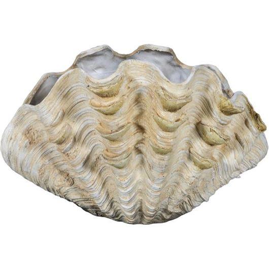 Picture of MAGNUS shell decoration h30cm cream