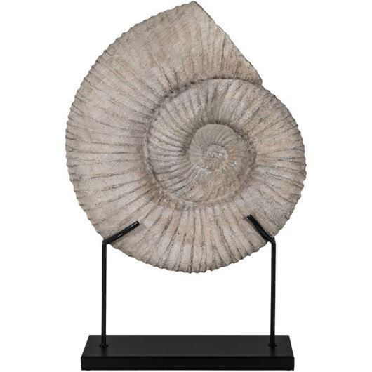 Picture of FOSSIL shell decoration h63cm grey
