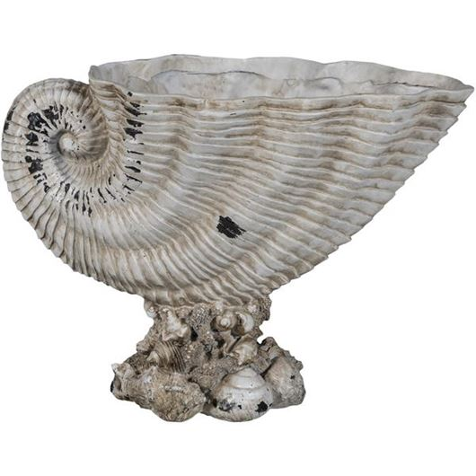 Picture of AAHNA shell decoration h39cm cream